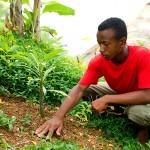 Programmes de reboisement d'espèces endémiques